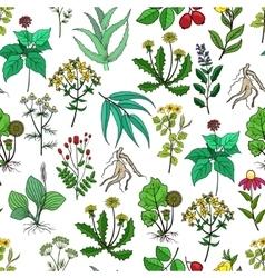 Drug plants and medicinal herbs background vector image