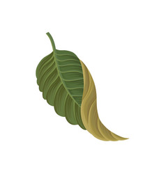 green leaf of tropical plant tropic botany vector image