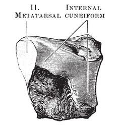 Middle cuneiform vintage vector