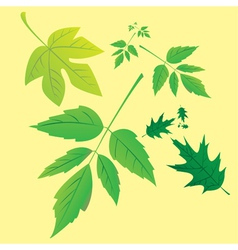 Nature leaves vector image