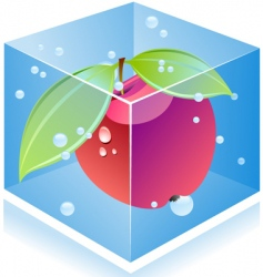 apple inside ice cube vector image vector image