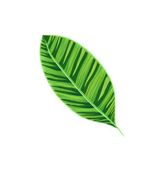 leaf of tropical plant tropic botany element vector image vector image