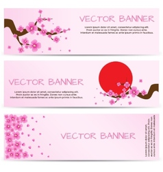 Spring Banner with Blooming Sakura vector image vector image