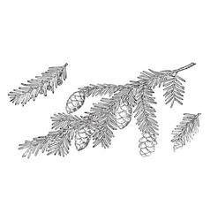 Branch of canadian hemlock vintage vector