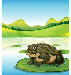 Frog and pond vector image vector image
