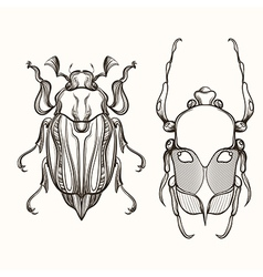 Hand drawn engraving sketch of scarab beetle and vector