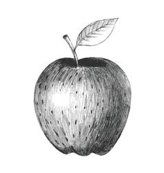 Sketch of an apple vector