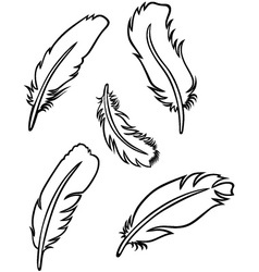 Feather set vector