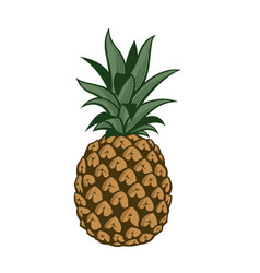 Pineapple fruit image vector