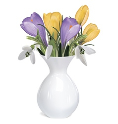 Spring bouquet of crocuses and snowdrops in vase vector