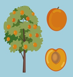 Apricot fruit and tree vector