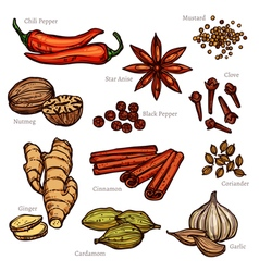 Sketch herbs and spice color set vector