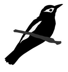 Black silhouette of oriole vector