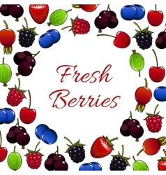 Fresh forest berry and garden berries poster vector image vector image