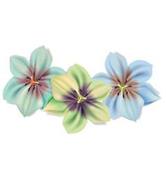 Beautiful flowers bouquet summer flowers vector