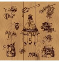 Honey hand drawn vector