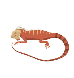 Iguana lizard reptile isolated vector