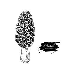 Morel mushroom hand drawn vector image vector image