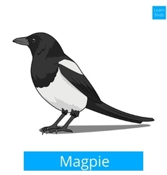 Magpie learn birds educational game vector