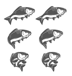 Set of vintage swimming carp fish vector