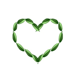 Beautiful green leaves in a beautiful heart vector