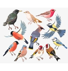 Set of songbirds vector