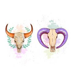 Skull sheep and buffalo collection vector