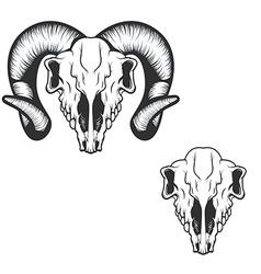 ram skull vector image