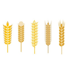 cereal design elements vector image