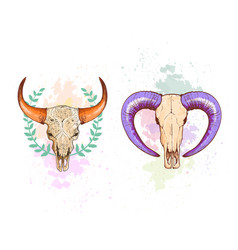 skull sheep and buffalo collection vector image vector image