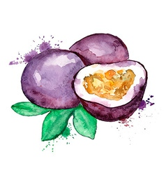 Watercolor of isolated passion fruit vector
