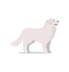 labrador in stand on white background vector image