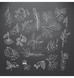 Set of garden and wild hand-drawn chalk berries vector
