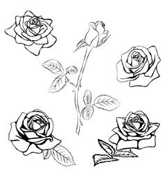Set rose sketch vector