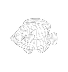 Angel fish sea underwater nature adult black and vector