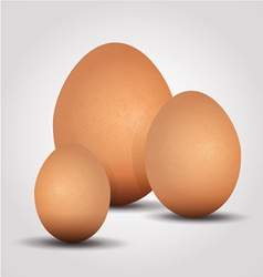 Eggs on a white background vector image vector image