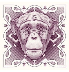Hand drawn portrait of monkey isolated vector