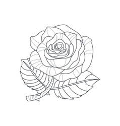 Rose flower monochrome drawing for coloring book vector