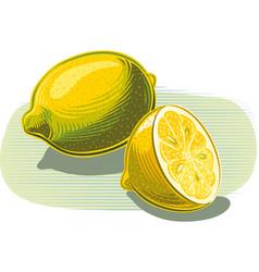 Lemons on white vector
