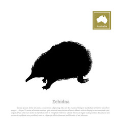 black silhouette of echidna on a white background vector image