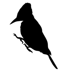 Black silhouette of woodpecker vector