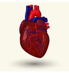 Human heart cartoon vector