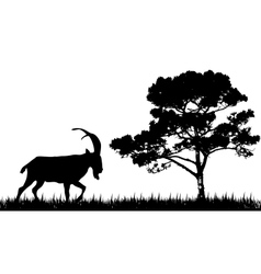 silhouette of goat and tree vector image
