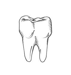 tooth Dental medicine health vector image vector image