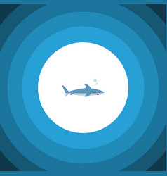 isolated gray fish flat icon shark element vector image vector image