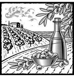 Olive harvest black and white vector