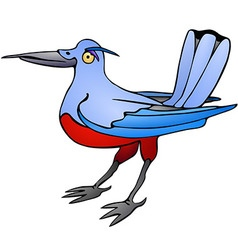 Bird with red belly vector