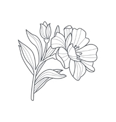 Calendula flower monochrome drawing for coloring vector