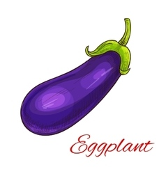 Eggplant vegetable isolated sketch vector