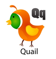 Alphabet q with quail vector